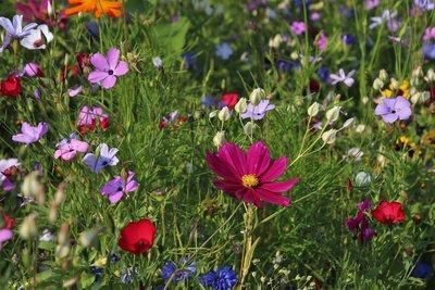 zomer bemesting voor de planten