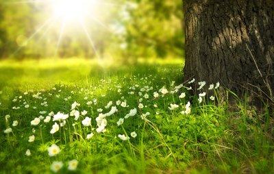 voorjaars bemesting universeel voor tuin en gazon